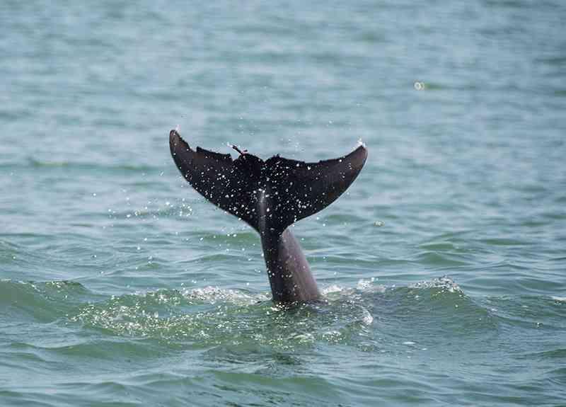 dolphin tours myrlte beach