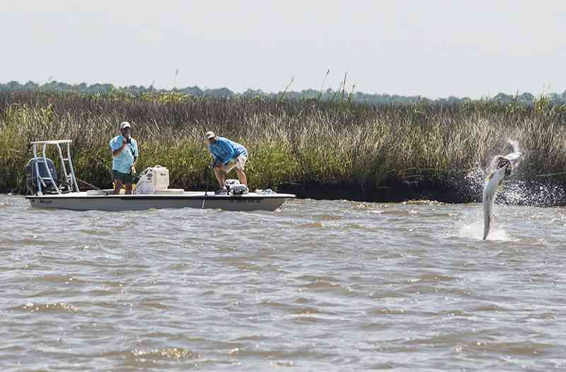 Winyah bay tarpon charters myrtle beach guide service for Fishing charters myrtle beach